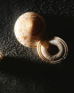 minimalist-snail-tall-l