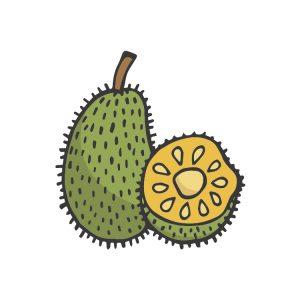 jackfruit-clipart-5