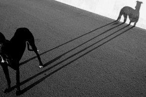magical-art-of-shadow-photography-19